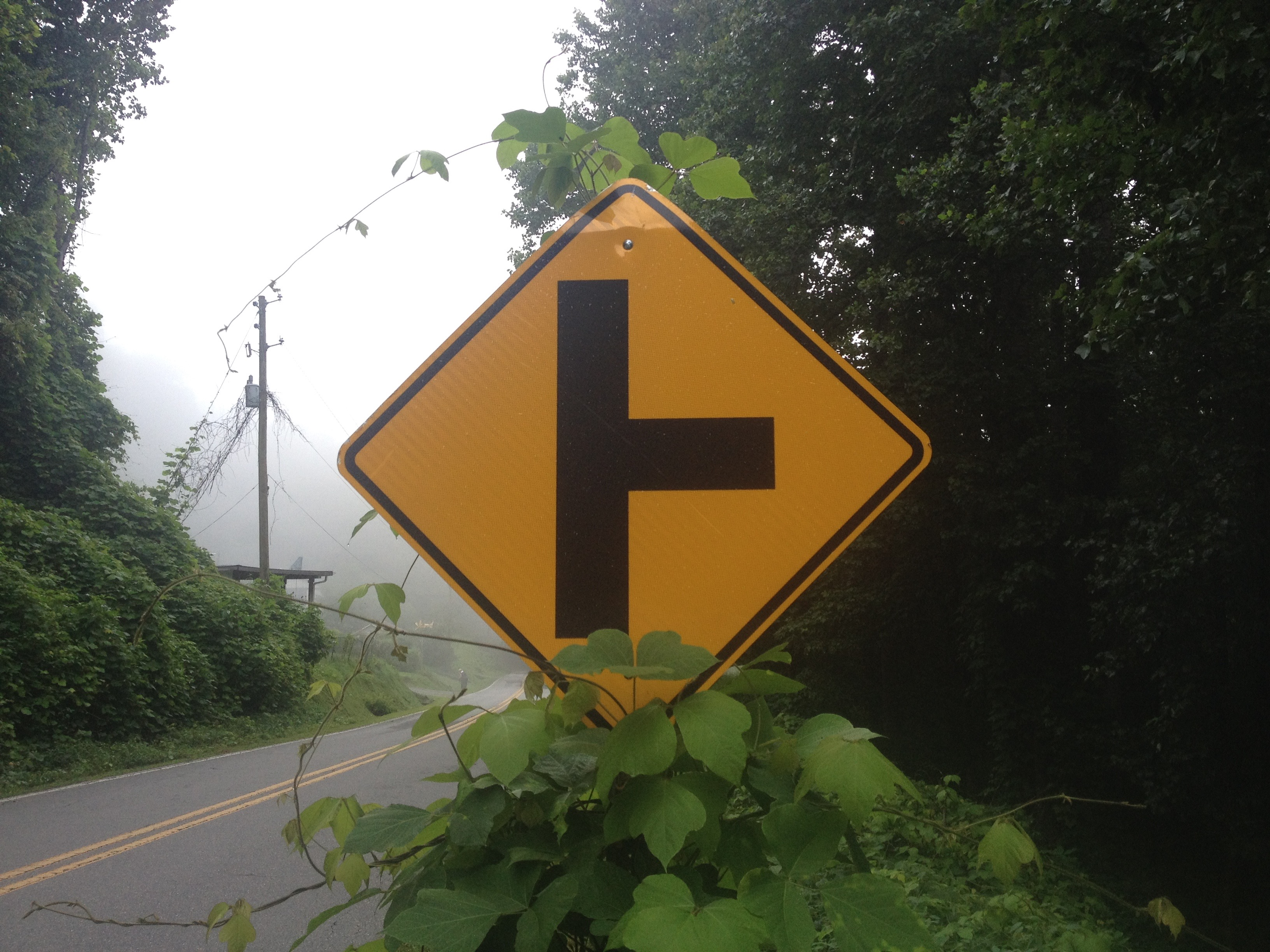 Kudzu vs. Road Sign in Black Mountain
