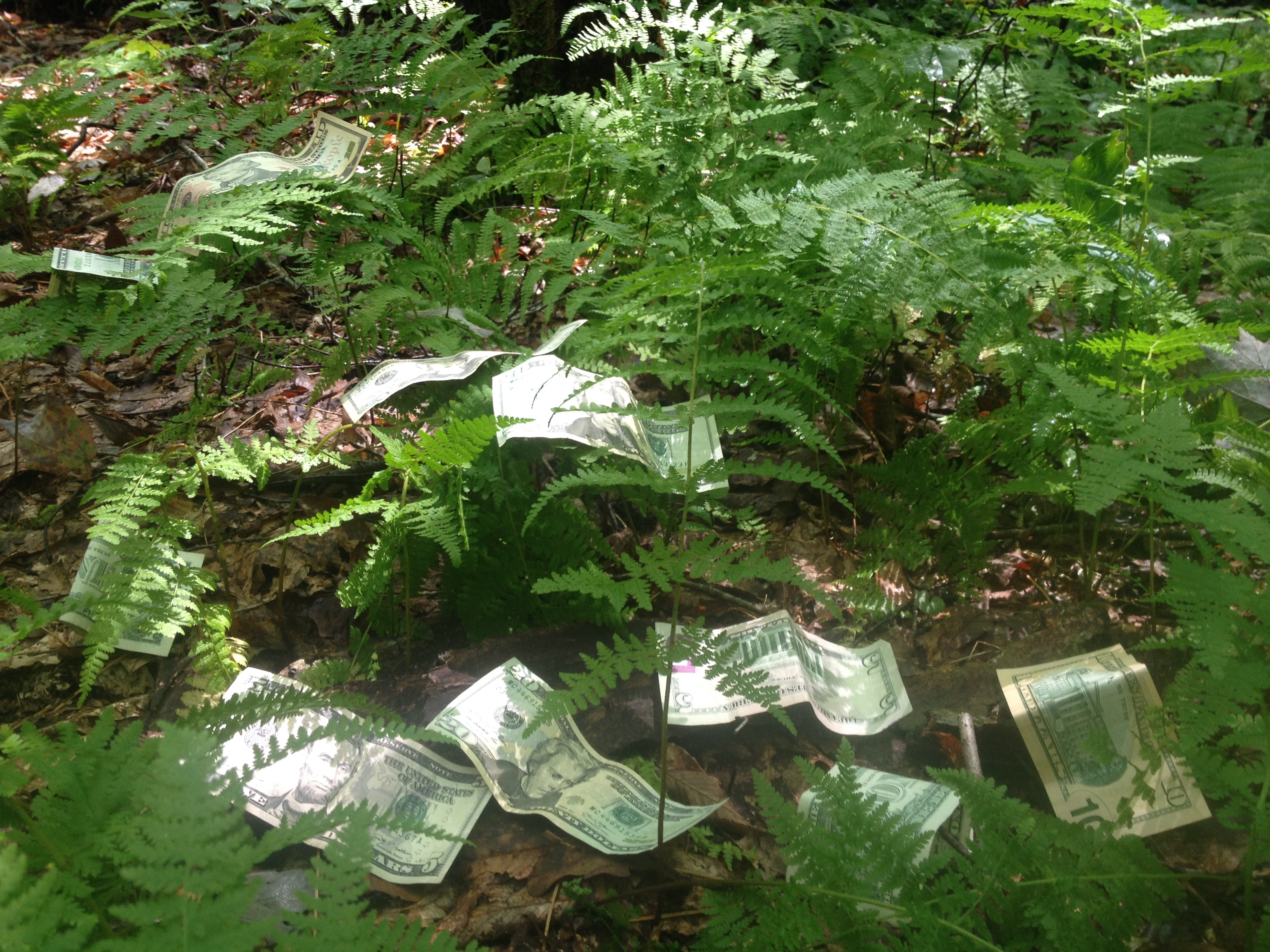 Federal Reserve Notes in the Ferns